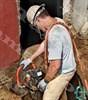 Бензиновая цепная пила по бетону ICS 660GC - фото 6503